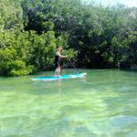SUP Keys Boat Tours mangrove tour