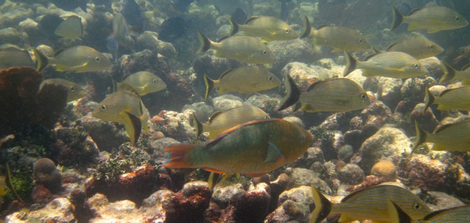 snorkeling Newfound Harbor fish