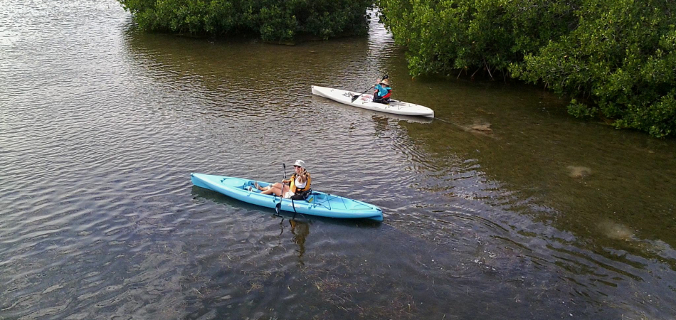 kayak mangrove keys