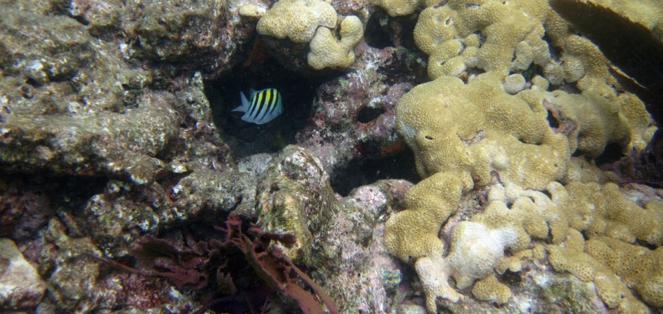 reef snorkel st major