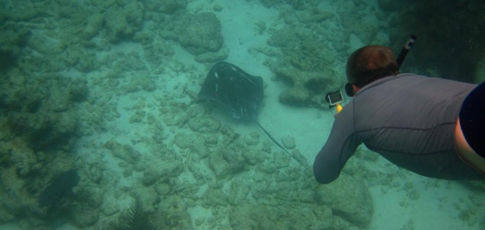 reef snorkel ray
